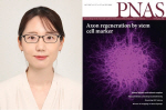 동아대 의과대학 신정은 교수, SCI급 저널 'PNAS'에 논문 게재