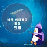 [극지와 바다이야기] 2편 : 남극 생태계의 중심 크릴