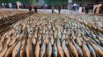 방어 하루 20만 마리 위판 기록