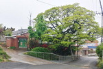 김해 한림면 전국 최고령 이팝나무 기념공원 조성