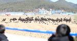 고성군·몽골 손잡고 '겨울진객 독수리' 보호 나섰다