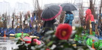 봄비 내리는 거창 묘목시장