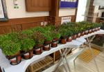 '어르신 꽃길만 걸으세요'범천1동 마을교회 반려식물 나눔