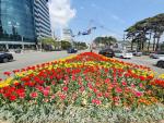 부산 금정구, 온천천에 꽃 6만 본 심었다