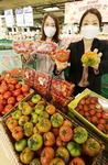 대저 짭짤이 등 유명 토마토 다 있네