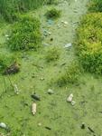 희귀식물 보고 함안 대평늪, 육지화·오염 몸살