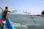 전복·개조개·붕어 등 수산종자 76만 마리 방류
