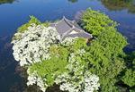 이팝나무 꽃 활짝