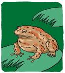 [도청도설] 두꺼비를 부탁해