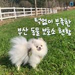 [카드뉴스]턱없이 부족한 부산 동물보호센터 현황