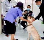 '킁킁' 땀냄새로 코로나 환자 찾는 태국 탐지견