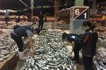 어자원 고갈로 내년 6월까지 총허용어획량(TAC) 감소