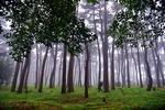 [바캉스 특집-울산 동구] 대왕암공원 해송숲 거닐고, 심장쫄깃 출렁다리 건너봐