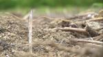 부산시민공원 땅속 오염토 검출...미적대는 부산시