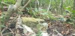 울산 신불산서 멸종위기 야생 생물 Ⅱ급 구름병아리난초 자생지와 개화 모습 포착