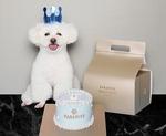 반려동물 선물로 고급 케이크 어때요